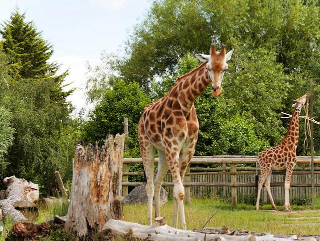 PTSG delivers specialist services at Chester Zoo